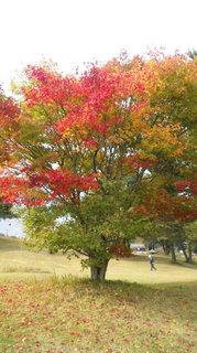 園内の木.jpg